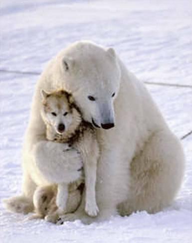 Polar Bear & Husky